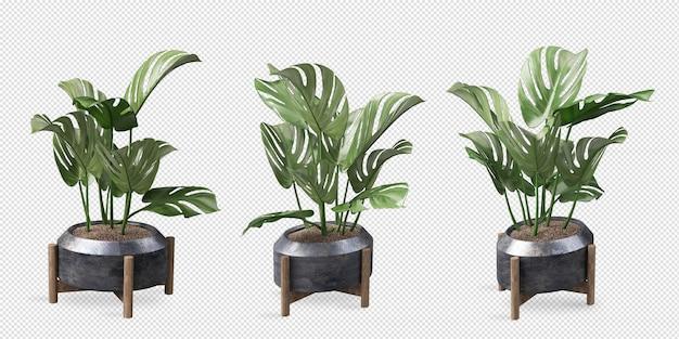 Vários ângulos de planta monstera em vaso em renderização 3d