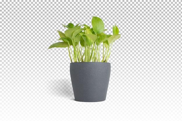 Vaso de planta isolado em renderização 3d isolado
