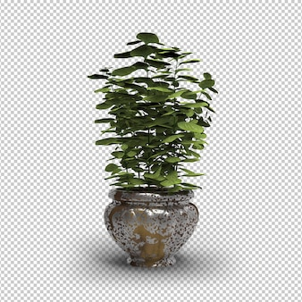 Vasos de plantas isoladas. vaso de flores de ouro moderno. parede transparente. vista frontal.