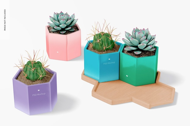 Vasos hexagonais com modelo de bandeja de bambu, perspectiva
