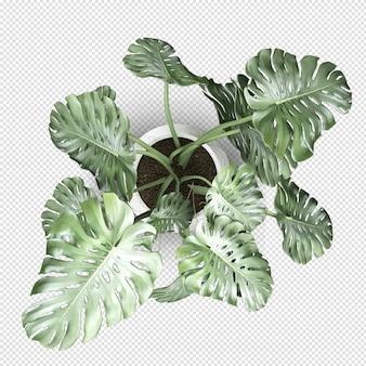 Vista superior da planta monstera em vaso em renderização 3d