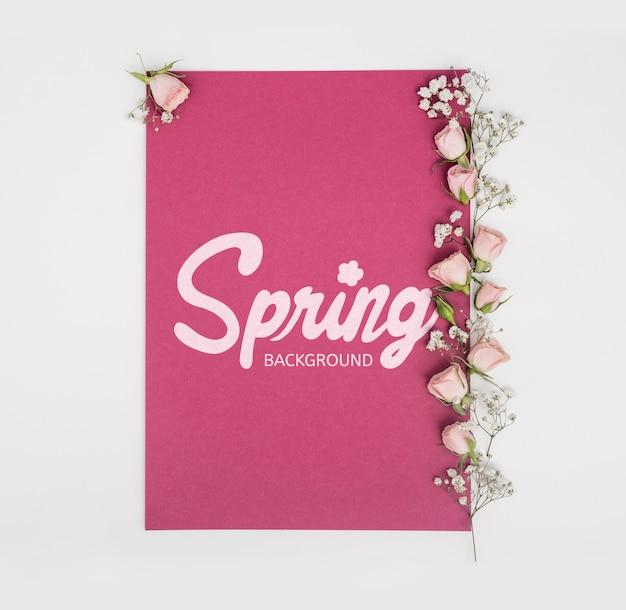 Vista superior de rosas da primavera