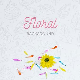 Vista superior elegante fundo floral