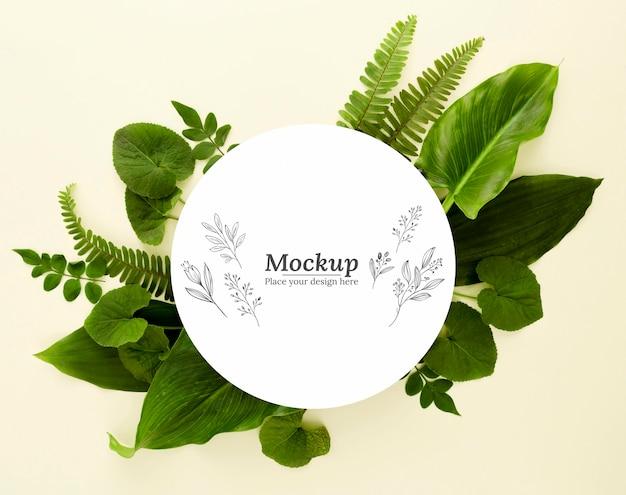 Vista superior variedade de folhas verdes com maquete