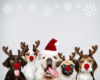 Gruppo di cuccioli che indossano costumi natalizi per festeggiare il Natale
