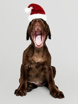 Ritratto di un simpatico cucciolo di Labrador Retriever che indossa un cappello di Babbo Natale