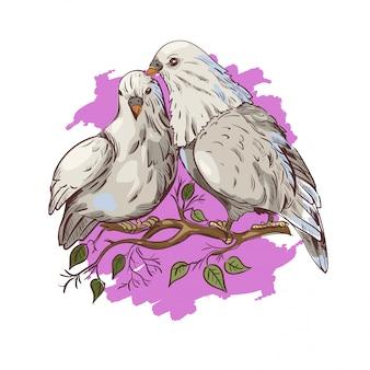 14 février, pigeon oiseaux symbole de l'amour couple isolé sur la branche.