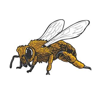 Abeille frelon ou tueur abeille animal vintage main dessiner
