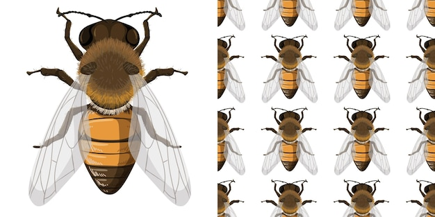 Abeille à miel et fond sans faille