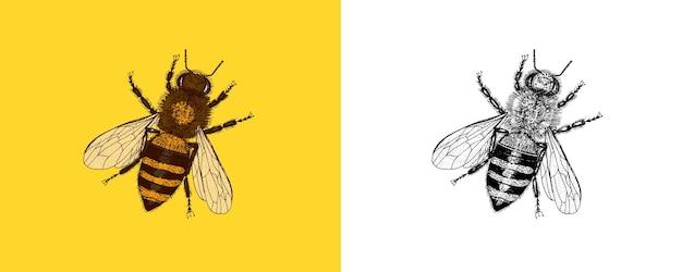 Abeille et miel hydromel et insecte vecteur gravé à la main vintage vieux croquis pour tshirt ou