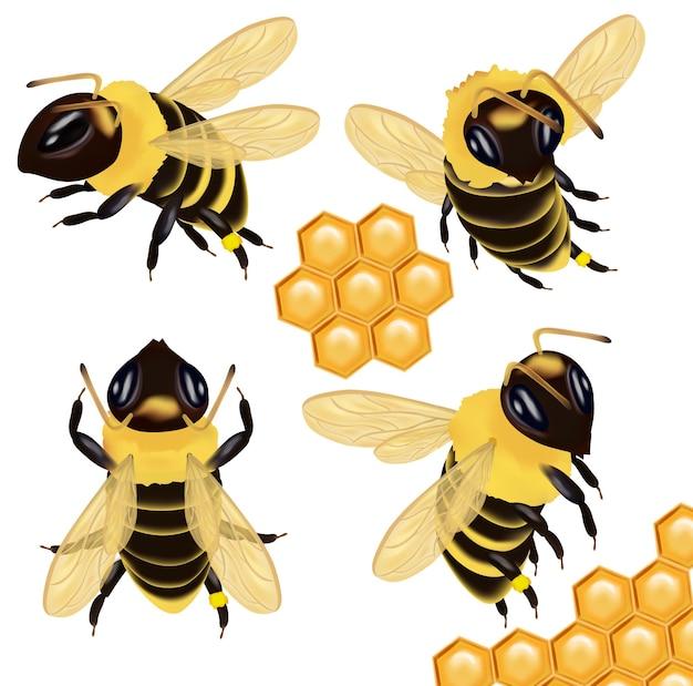 Abeille à miel sous différents angles et nid d'abeille