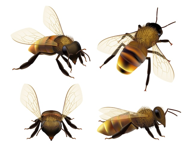 Abeille réaliste. la faune insecte abeille mouche danger guêpe pollen bugs collection de vecteur de produit naturel écologique eco. illustration guêpe ou abeille, bourdon et apiculture