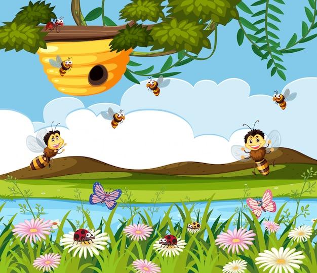 Abeille et ruche dans la nature