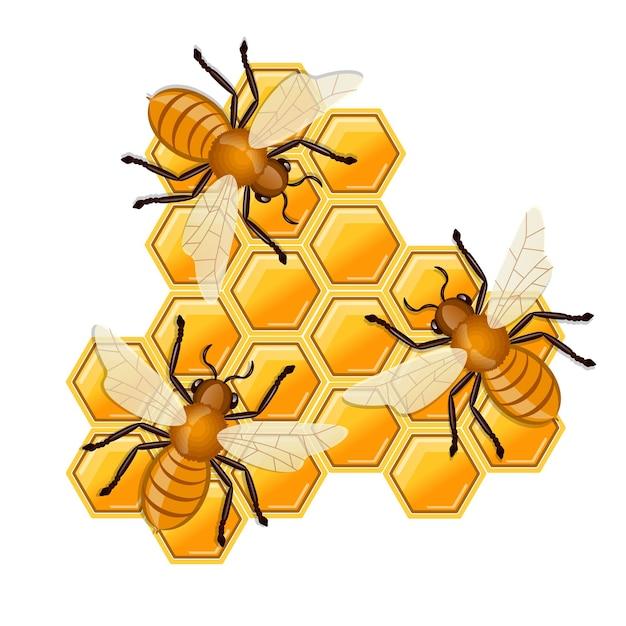Abeilles assises sur un peigne de miel.