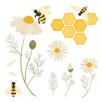 Abeilles et fleurs de camomille. sauvez les abeilles