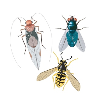Abeilles insectes volent cafard