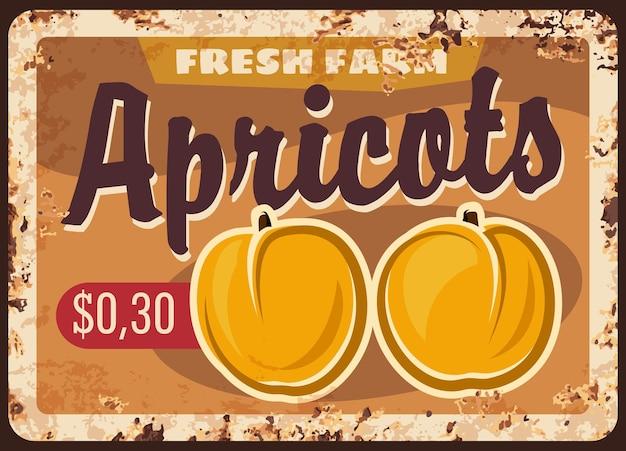Les abricots de la ferme fruitière récoltent une plaque de métal rouillé. abricot mûr ou fruits de pêche dessinés à la main