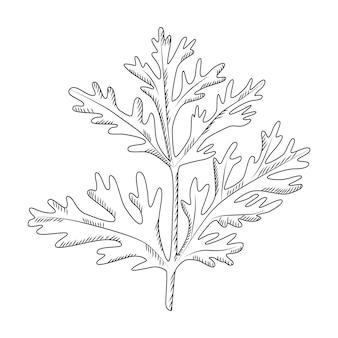 Absinthe isolé sur fond blanc. plante sauvage en style gravé. contour noir de croquis vintage se bouchent. conception d'illustration vectorielle.