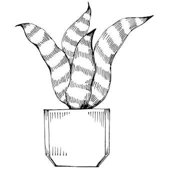 Accueil plante en pots croquis. dessin de contour illustration isolée de la croissance des fleurs dans une plante suspendue pour la décoration intérieure de la maison ou du bureau. vecteur de fleurs de jardin.