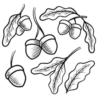 Acorn illustration vintage dessinés à la main