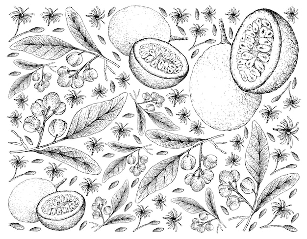 Acronychia pedunculata et fruits de la passion dessinés à la main