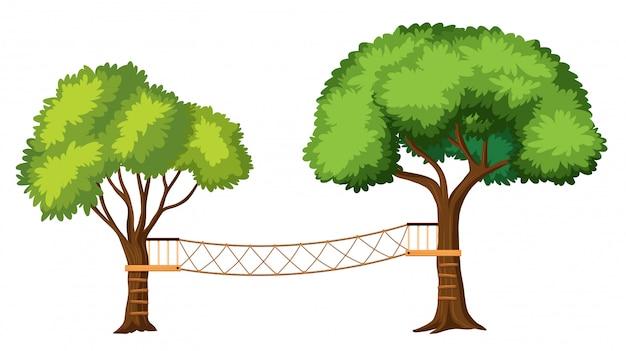 Activités d'aventure dans les arbres isolés