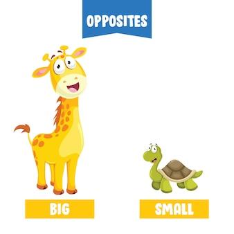 Adjectifs opposés avec des dessins animés