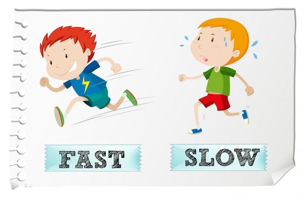 Adjectifs opposés avec rapidité et lenteur