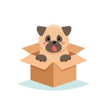 Adopter un animal de compagnie - chien mignon dans une boîte, sur fond blanc