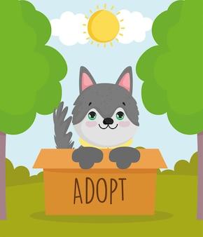 Adoptez nous chien box
