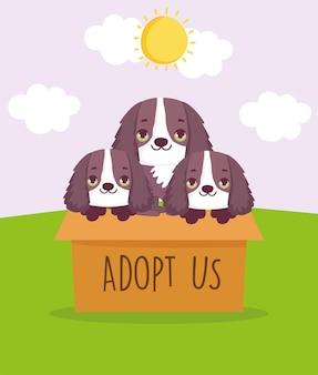 Adoptez-nous des chiens à l'intérieur de la boîte