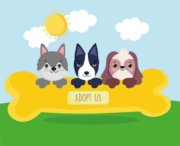 Adoptez-nous des chiens mignons