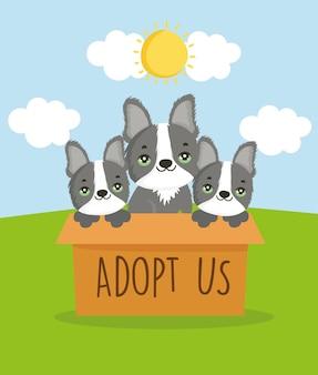 Adoption de chiens mignons
