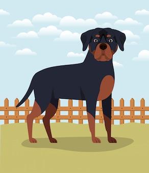 Adorable animal de compagnie de chien rottweiler dans le camp