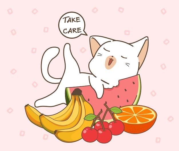 Adorable chat en bonne santé et fruits
