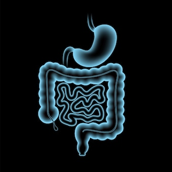Affiche anatomique du côlon et de l'estomac. petit et gros intestin dans le corps humain