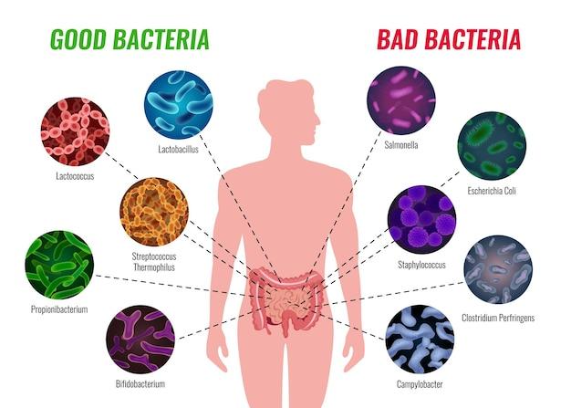 Affiche de bonnes et mauvaises bactéries avec illustration plate de symboles de soins de santé et de traitement