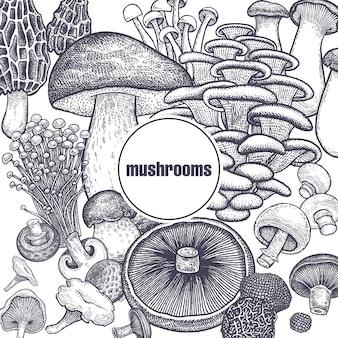 Affiche de champignons comestibles.