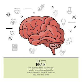 Affiche colorée le cerveau avec des icônes monochromes