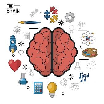 Affiche colorée le cerveau en vue de dessus de ses deux hémisphères