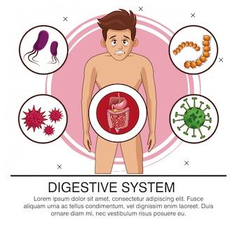 Affiche du système digestif avec information