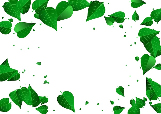 Affiche de fond blanc de vecteur de feuillage de menthe volant. brochure de feuilles biologiques. conception d'écologie de feuille de marais. bannière de vent des verts.