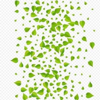 Affiche de fond transparent de vecteur d'arbre de feuillage vert. frontière de légumes verts à base de plantes. modèle de flou de feuilles de citron vert. branche de ressort à lames.