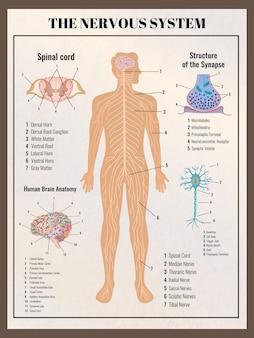 Affiche de neurologie avec des éléments infographiques de style rétro vintage s des entrailles du corps et illustration de légendes de texte modifiable