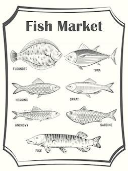 Affiche de poissons différents dessinés à la main