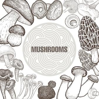 Affiche avec des variantes de champignons.
