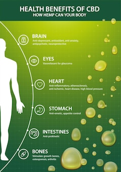 Affiche verte avec infographie des bienfaits du cbd pour votre corps et silhouette du corps humain. avantages pour la santé du cannabidiol cbd du cannabis, du chanvre, de la marijuana, effet sur le corps
