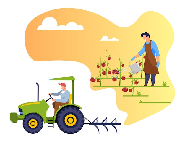 Agriculteur arrosant les tomates, travailleur conduisant le tracteur