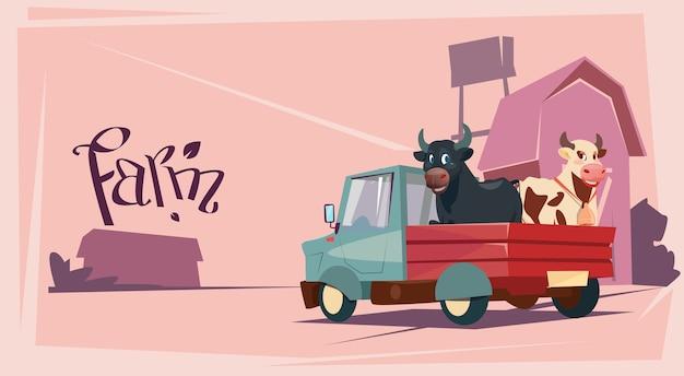 Agriculteur élevage animaux vache terrain agricole