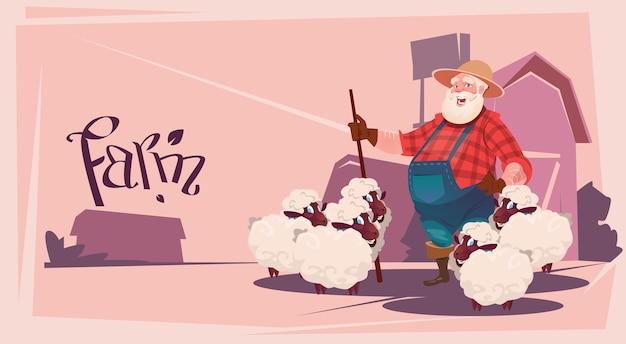 Agriculteur élevage de moutons laine ferme plat vector illustration